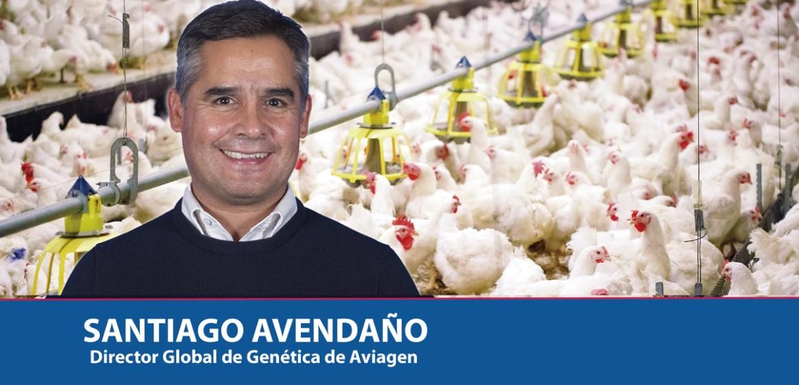 Crianza Sustentable: Clave para el éxito en la producción avícola