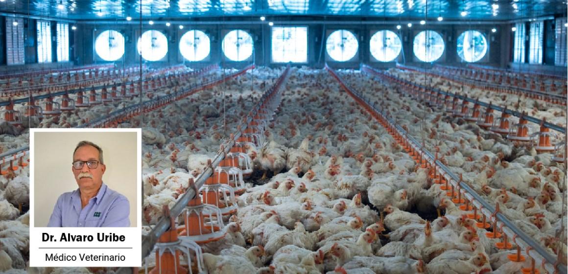 7° Webinar de Aviagen: ¿Cómo fortalecer el rendimiento avícola y sus utilidades?