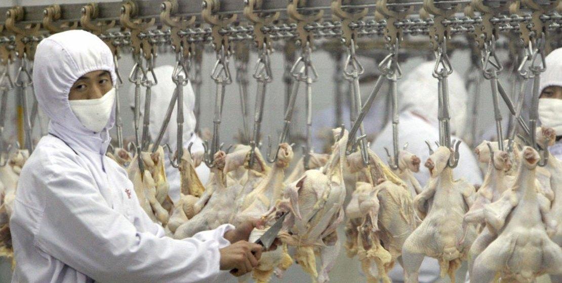 Crecería el comercio mundial de la carne de pollo