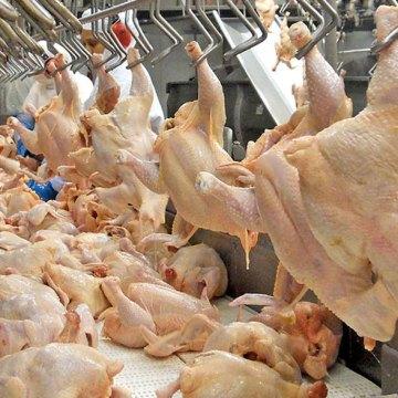 Propollo: UE prohíbe residuos de antibióticos en carne de pollo