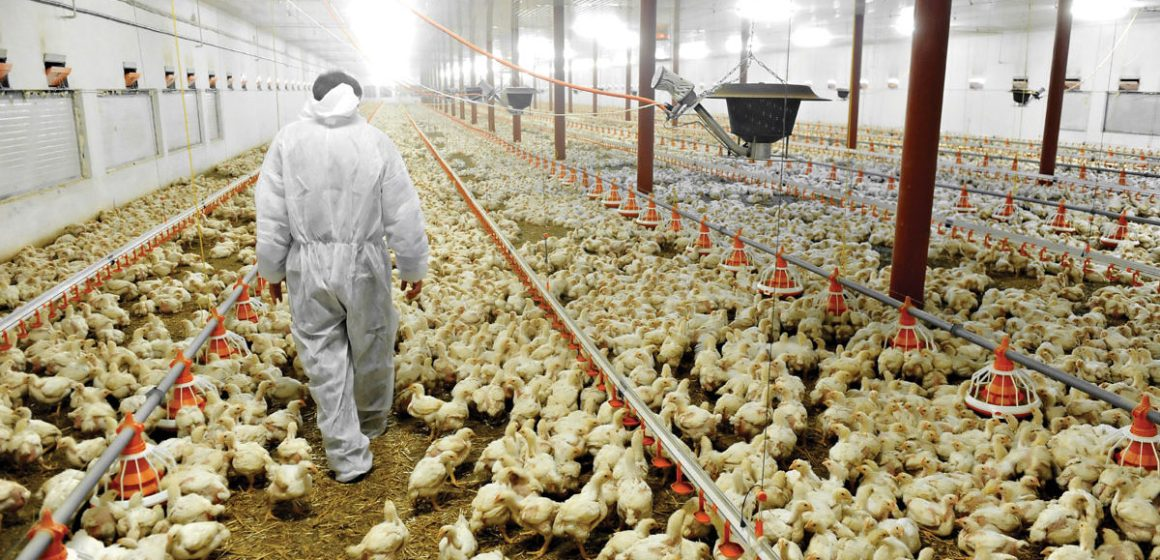 Avicultura mundial sigue beneficiada por PPA