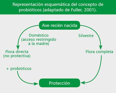 modulacion-del-sistema-digestivos-aves-comerciales-03
