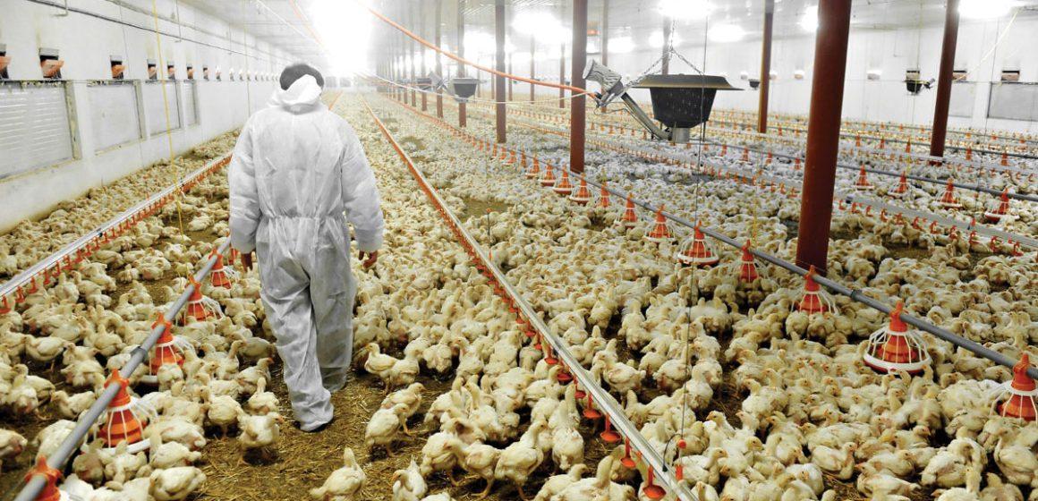 La Disciplina metodológica 5S aplicado en producción avícola