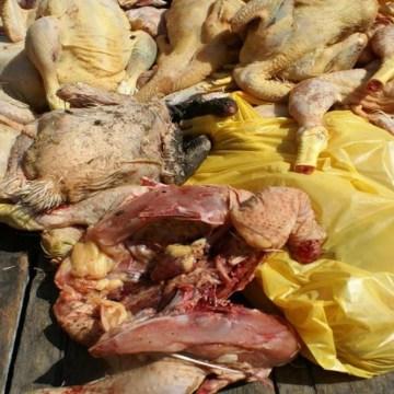 Camales en Chiclayo usaban tintes para maquillar pollos y darle buena apariencia