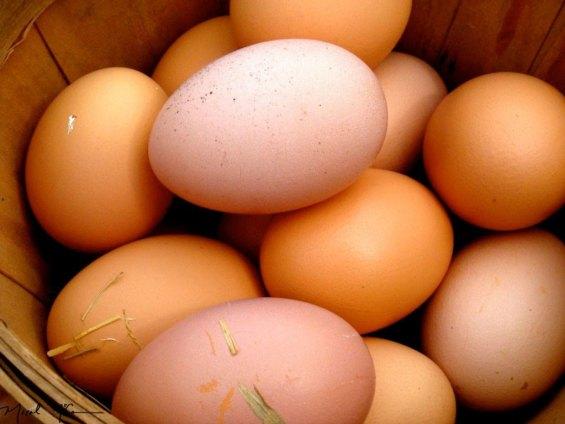 huevos-caseros-del-campo-a-su-casa-D_NQ_NP_4993-MLA4001863847_032013-F.jpg