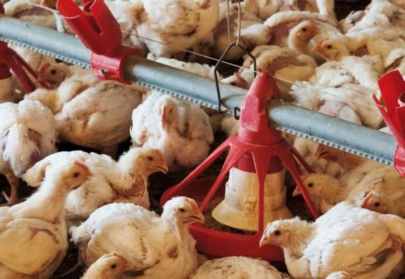 Proyecto de exportación avícola es preparado por la APA