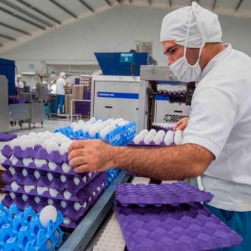 La avicultura, un negocio billonario, a futuro