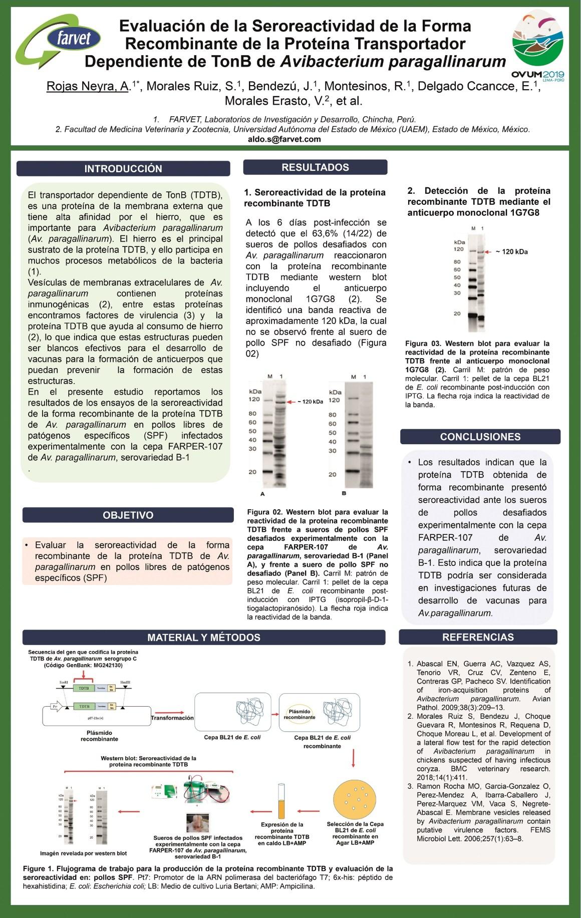 de la Seroreactividad de la Forma Recombinante de la  Transportador Dependiente de TonB de Avibacterium paragallinarum.jpg