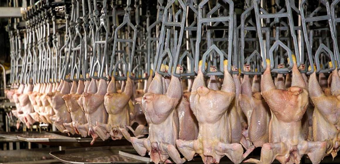 Exportación de pollo crecerá un 25% en Argentina