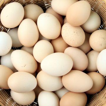 Colombia estudia el consumo de huevo por región