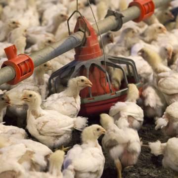 República Dominicana capacita a avicultores sobre bioseguridad
