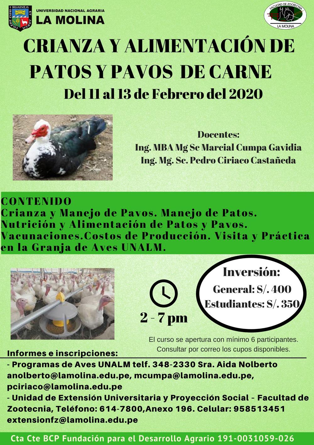 Patos-11-febrero