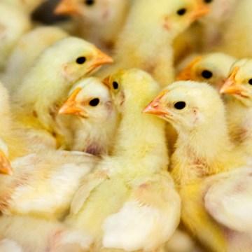 Apoyo a la sanidad agropecuaria y la inocuidad de los alimentos en las Américas
