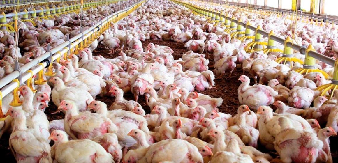 COVID-19: habrá modificaciones en las importaciones porcinas y avícolas de Filipinas
