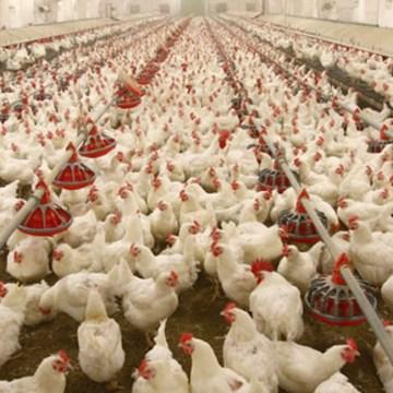 La situación de la influenza aviar en la Unión Europea