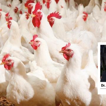 Cuidados de bioseguridad en el sistema de producción en tiempos de COVID-19