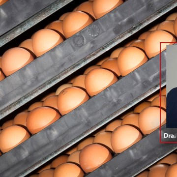 Este 01 de julio Aviagen presenta el webinar: Nuevas investigaciones sobre incubación