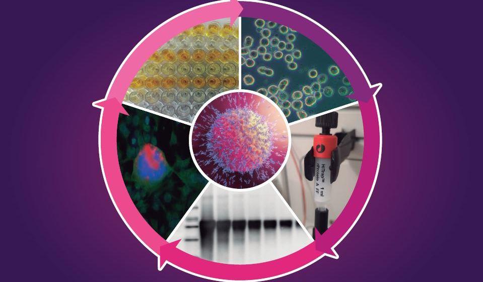 Farvet publica Manual de Laboratorio para Cultivo de Hibridomas