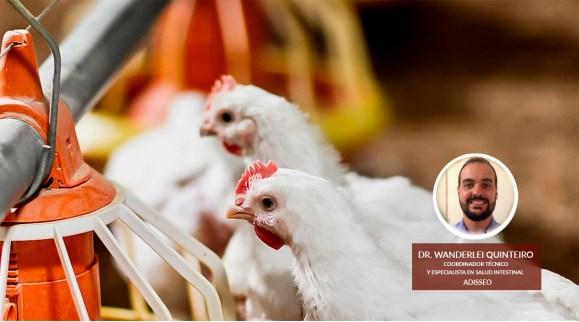 Addera realizó importante webinar sobre la mejora en productividad avícola con el uso de butiratos de liberación controlada
