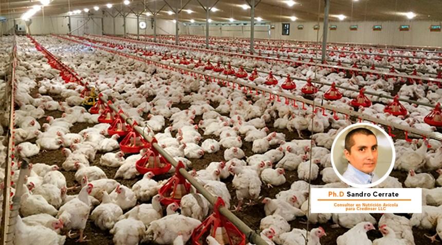 Battilana Nutrición realizó charla nutricional avícola y de seguridad contra el COVID-19