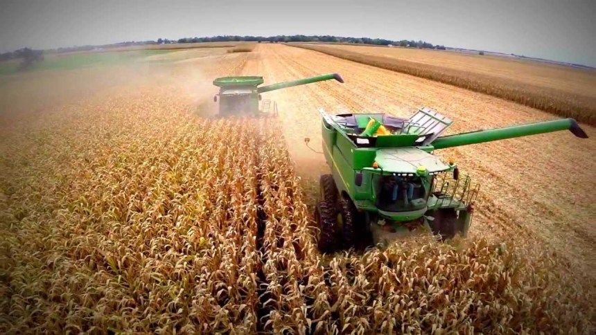 Perú, mercado clave para exportación de maíz estadounidense