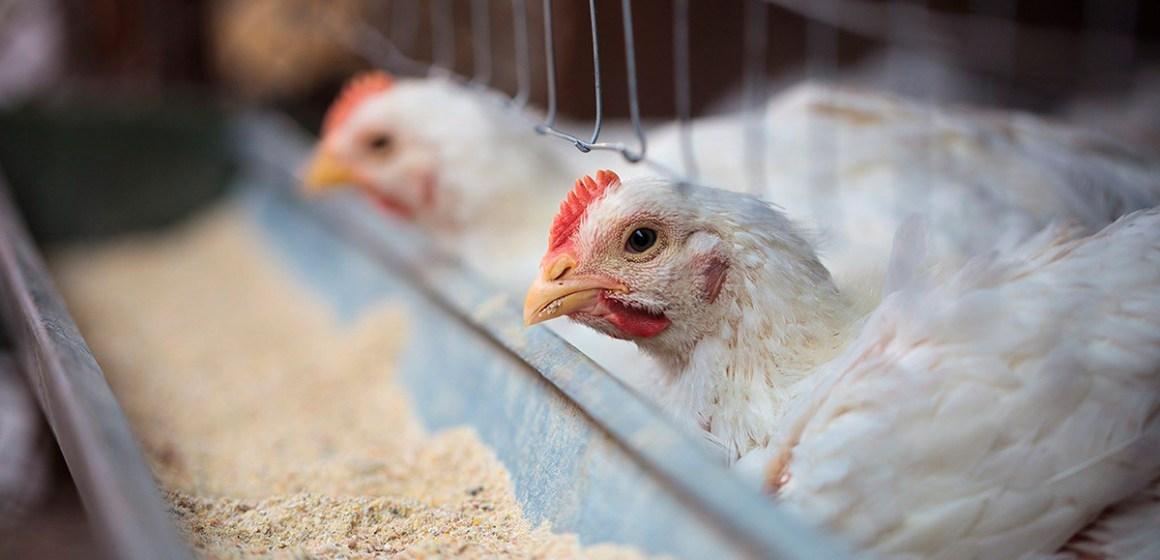 La bioseguridad y el cuidado con el manejo de los animales pueden prevenir futuras pandemias