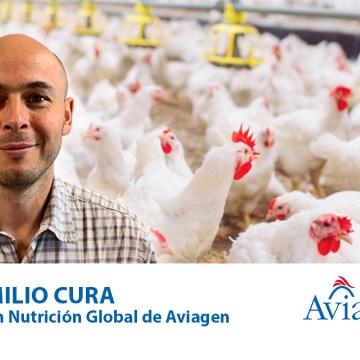 Aviagen América Latina presenta herramientas para ajustar el rendimiento de pollos de engorde frente al aumento de los costos de las materias primas