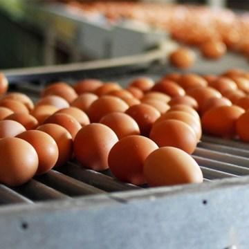Brasil: exportaciones de huevo continúan creciendo en primer semestre del 2021