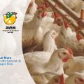 Grupo Aviagen compartió valiosos mensajes sobre bienestar y sostenibilidad en Congreso Avícola virtual AVEM 2021