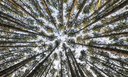 Vue de dessous en forêt
