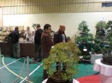 exposition bonsai bellignat selection regionale rhone alpes 2012