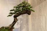 selection régionale EST 2012 - bonsai epicea 2