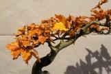 selection régionale EST 2012 - bonsai fagus 2