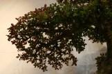 selection régionale EST 2012 - bonsai orme de chine 3