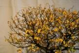 selection régionale EST 2012 - bonsai orme de chine foret 2