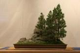 selection régionale EST 2012 - bonsai paysage 1