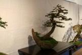 selection régionale EST 2012 - bonsai picea 2