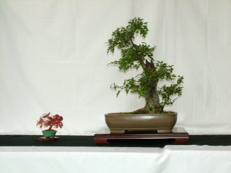 selection rhone alpes bonsai 2012 01