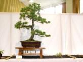 selection rhone alpes bonsai 2012 06