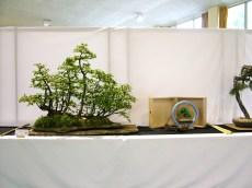 selection rhone alpes bonsai 2012 126