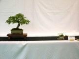 selection rhone alpes bonsai 2012 38