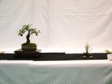 selection rhone alpes bonsai 2012 39