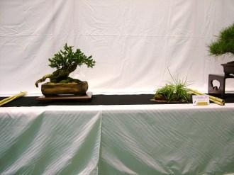 selection rhone alpes bonsai 2012 40
