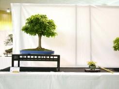 selection rhone alpes bonsai 2012 42