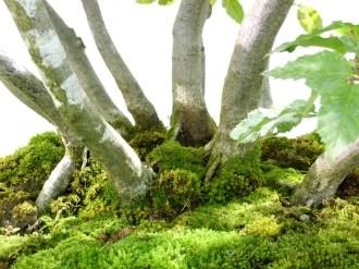 selection rhone alpes bonsai 2012 75