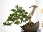 selection rhone alpes bonsai 2012 85