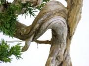 selection rhone alpes bonsai 2012 86