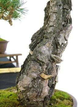 selection rhone alpes bonsai 2012 97