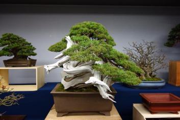 Kokufu 2013 stands - dragon shimpaku