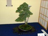 38th Gafu-ten in Kyoto 2013 - 17